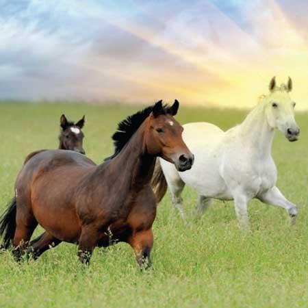Horse Agistment Website Design
